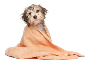 hka_dog-under-towel-01-300x225